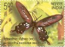 Endemic Butterflies of Andaman and Nicobar Islands